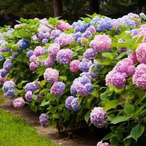 Plantas temporada y flor